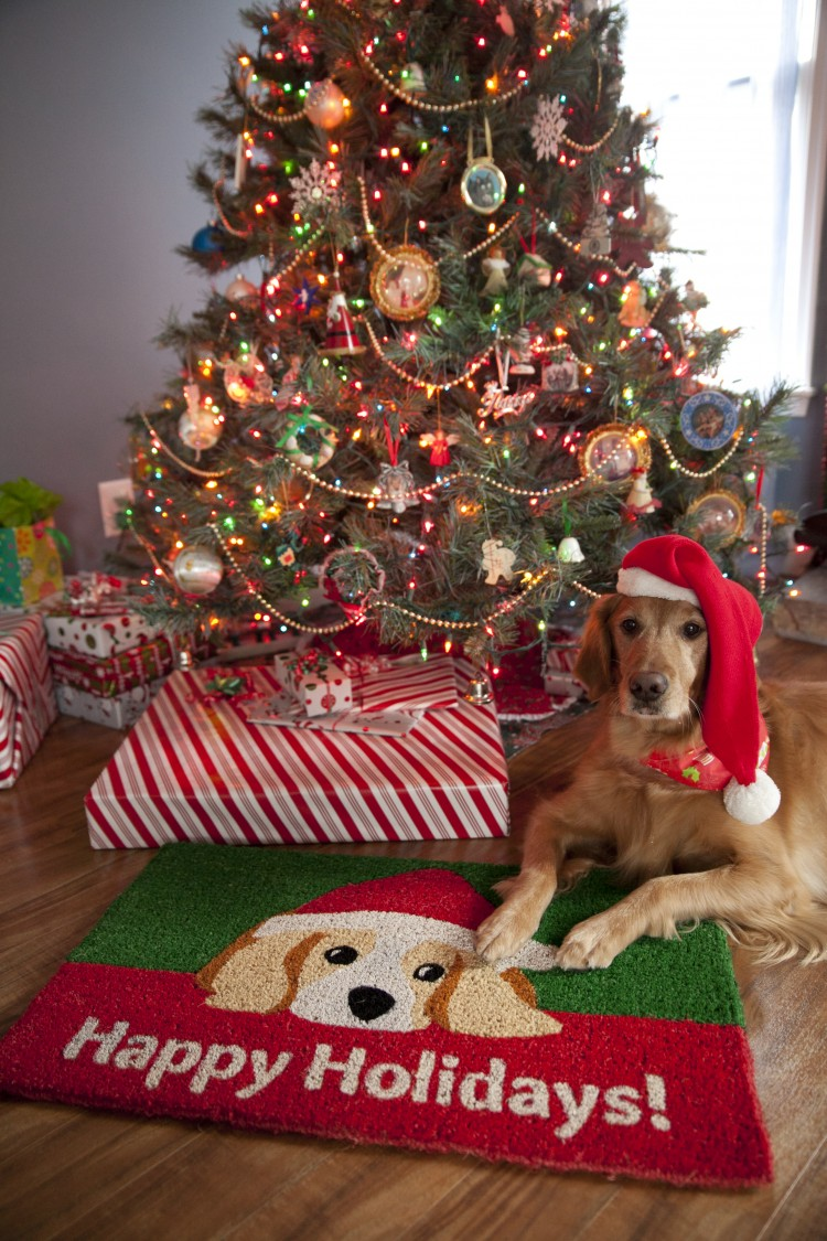 1063 S - Dog Lovers' Holiday